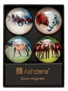 Set of 4 Glass Horse Magnets
